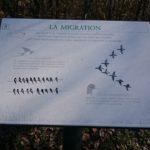 Migration des Oiseaux - Val-Joly